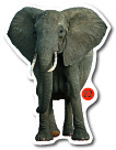 Wo leben Elefanten?