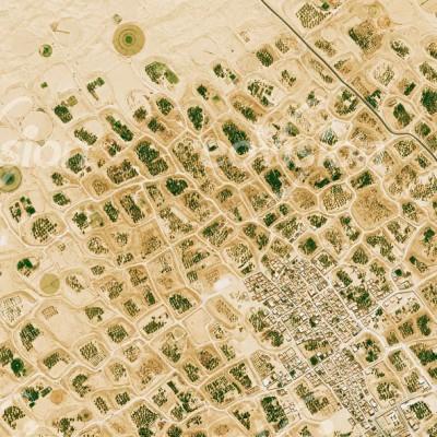 El Oued - Dattelpalmen