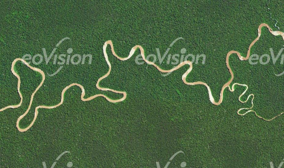 Akimeugah - Mangrovenwald und im Tieflandregenwald - große Artenvielfalt