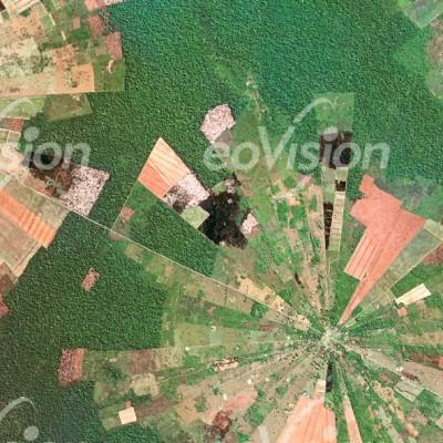 Bei San Remo wird der Regenwald in Sektoren gerodet
