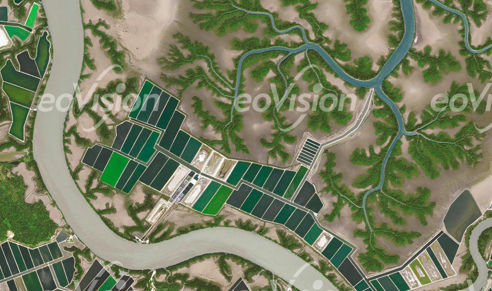 Am Golf von Fonseca werden wertvolle Mangrovenwälder zerstört.