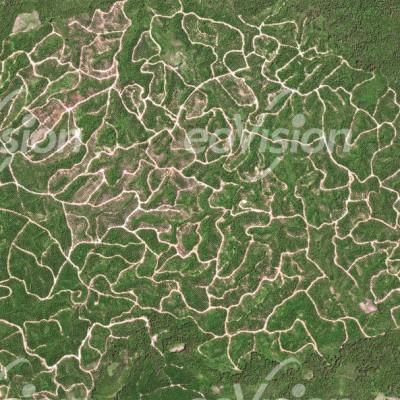 Statt des einstigen Regenwaldes erstrecken sich im Nordwesten Borneos heute weitläufige Ölpalmenplantagen