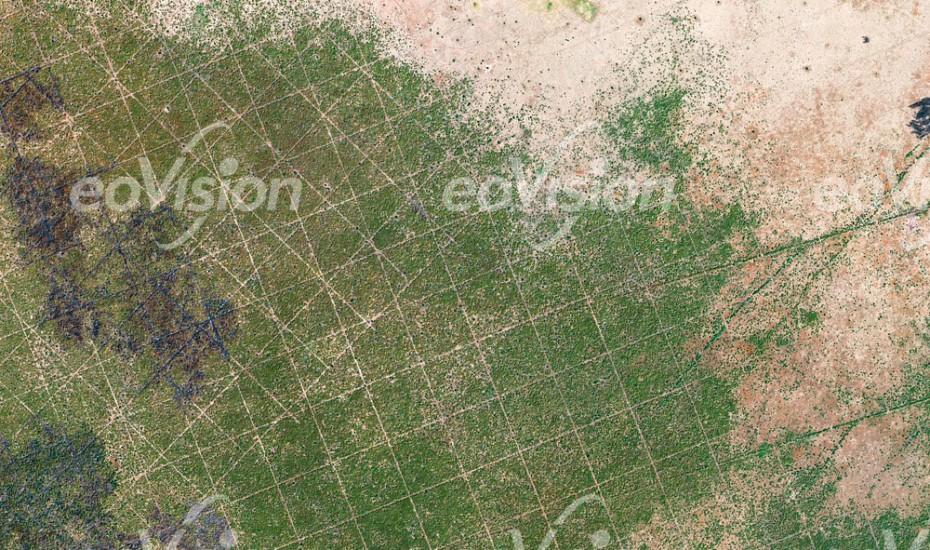 Sudan - Geometrische Linienraster in der Vegetation