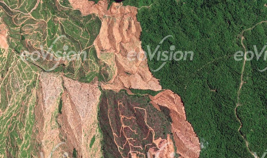 Dezimierung des natürlichen Regenwaldes in der malaysischen Provinz Sarawak