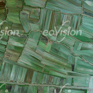 Nassreisanbau im Schwemmland von Thailand