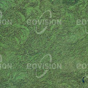 """Das Satellitenbild """"CONGAREE - USA"""" ist dem Bildband """"UNTOUCHED NATURE - Naturlandschaften in Satellitenbildern"""" entnommen. Bildbeschreibung: Umgeben vom Siedlungsraum South Carolinas beherbergt der Congaree Nationalpark den letzten größeren Hartholzwald der USA. Neben einem der höchsten natürlichen Kronendächer der Erde findet man hier auch Alligatoren."""